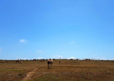 Grasmeer-nach-der Regensaison
