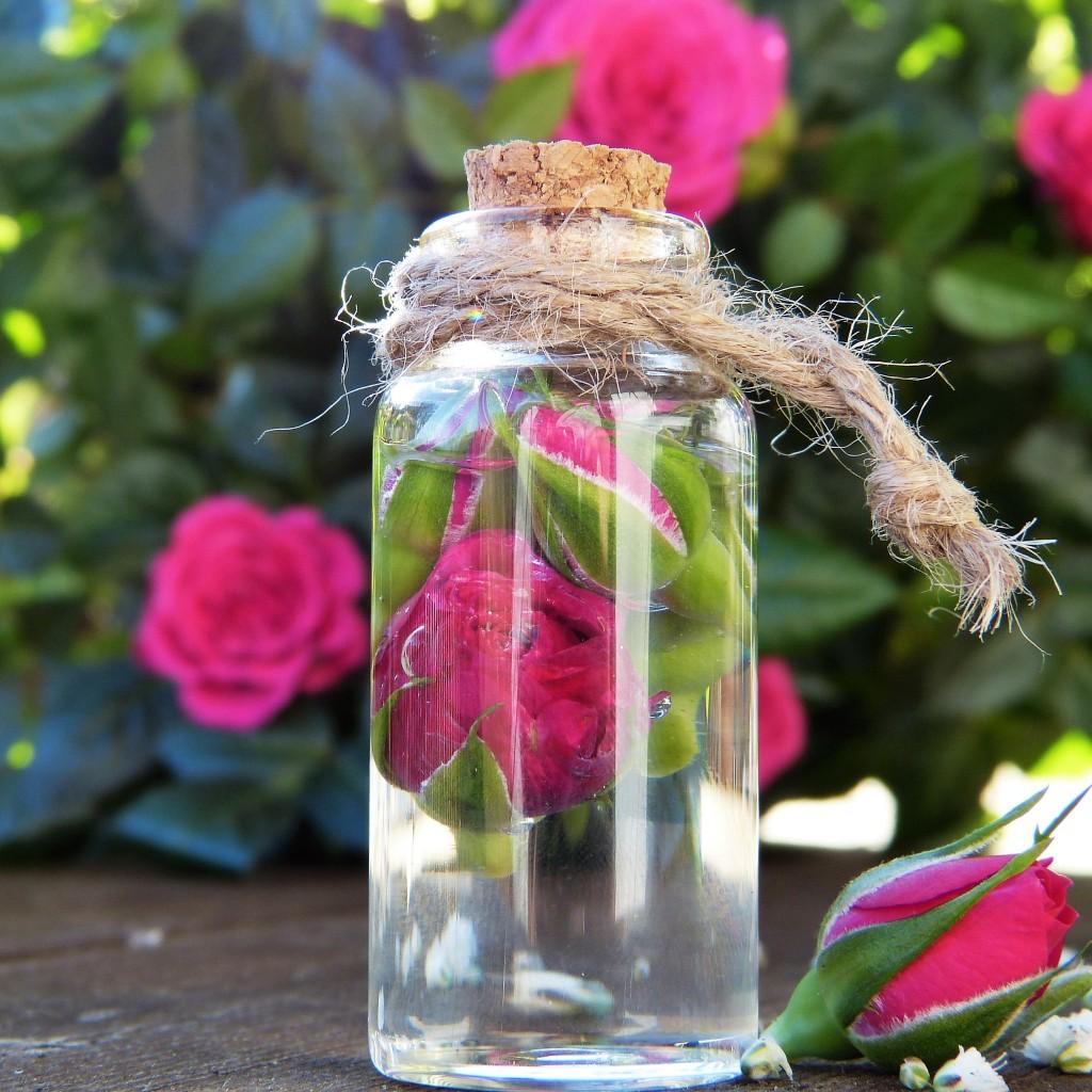 Rose in der Flasche
