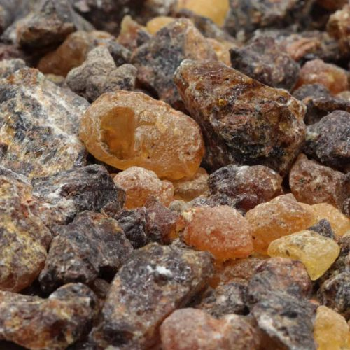 Weihrauch Somalia Boswellia neglecta.jpg